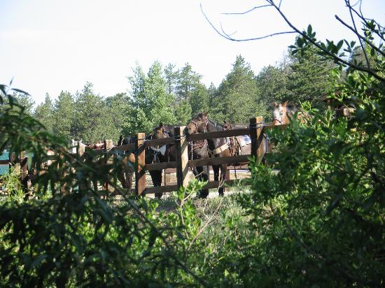 Elk Mountain Ranch: The horses are ready to go early in the morning!