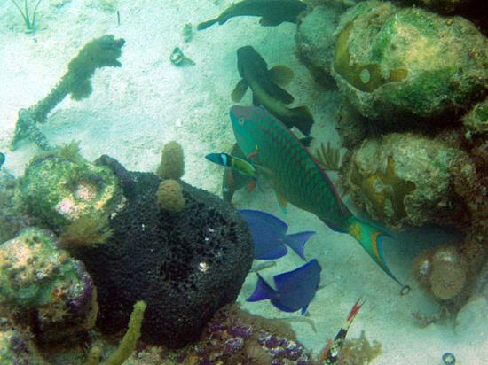 Aquamarine Beach Houses: Variety of fish at reef in front of ABH