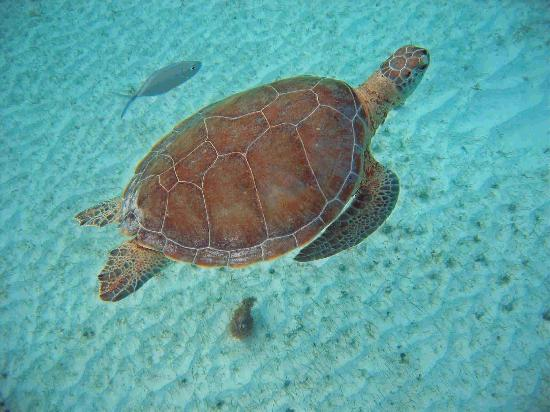 Anegada Island: Guide with a friend