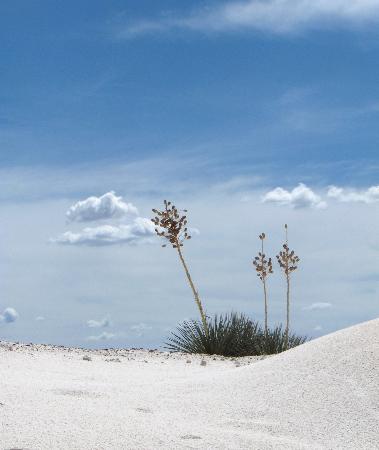 Ruidoso, NM: White Sands