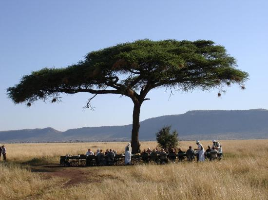 Serengeti National Park, Τανζανία: Breakfast Under a Tree in the Serengeti