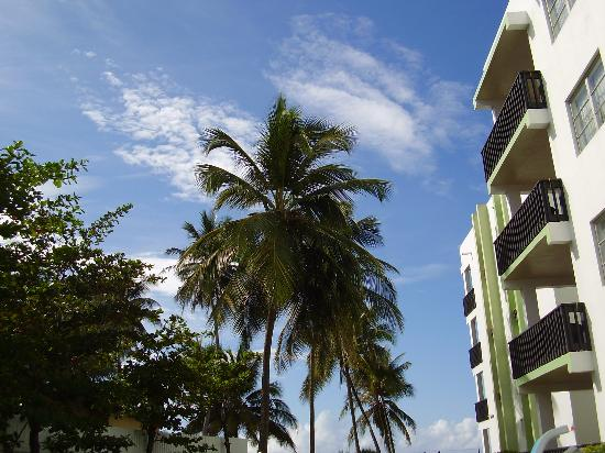 Magic Isle Beach Apartments: One of the blocks