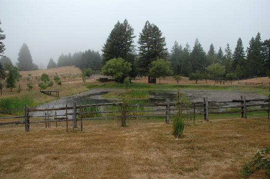 Blackbird Farm : Early morning fog over the fishing pond