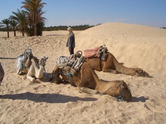 Marhaba Palace Hotel: Camel Riding in Sahara
