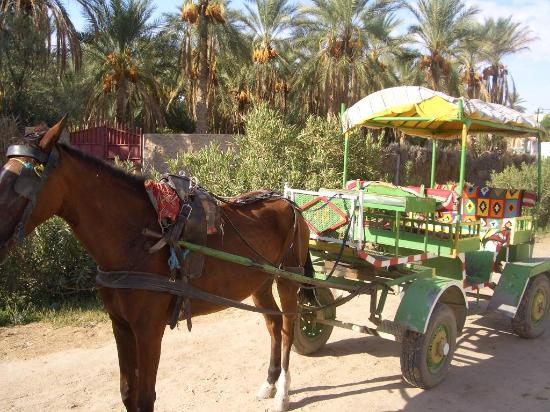 Marhaba Palace Hotel: Horse and Cart Trip round Tozeur Oasis