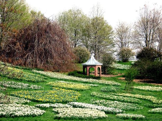 Winterthur daffodils in May - Picture of Winterthur Museum, Garden ...