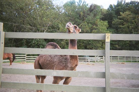 Rocking Horse Ranch Resort: Here's Chewy again, in the corral