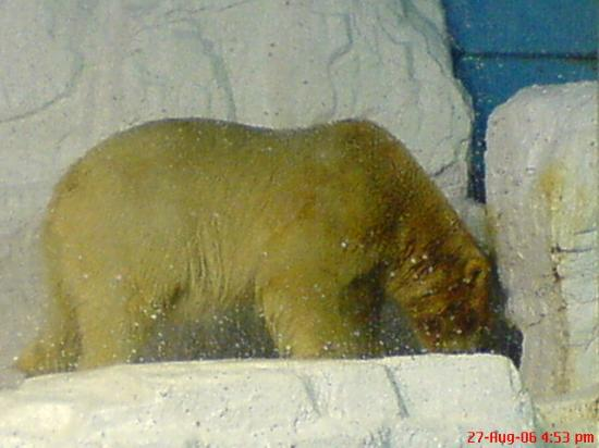 Dalian, China: Polar Bear