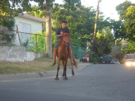 Vieques Villa Gallega A-16-N: Trasportation in Vieques