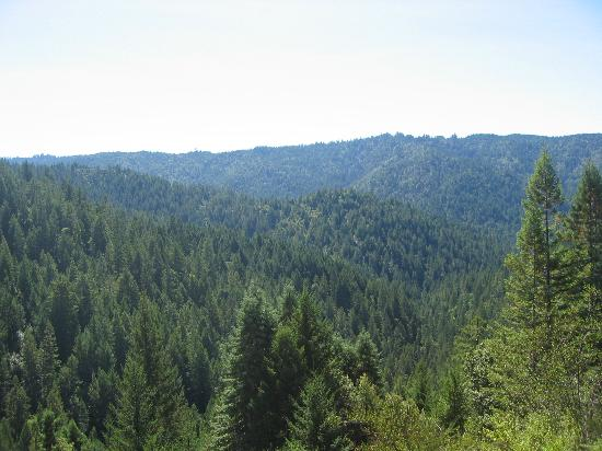 Elk, CA: Redwood forests on horseback ride with Ross Ranch