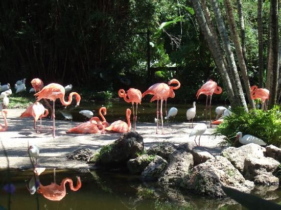 Davie, Floride : this is the sum of their flamingos