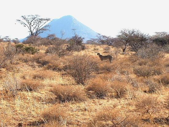 Samburu Serena Safari Lodge: 1st day on safari at samburu reserve