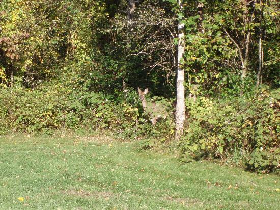 Shadow Mountain Escape: Deer at entrance to nature trail