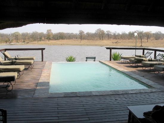 A view of the animals drinking over the pool