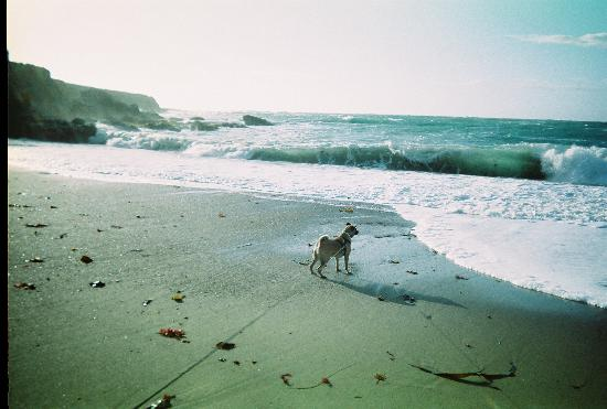 Los Osos, CA: my dog at Montano de Oro