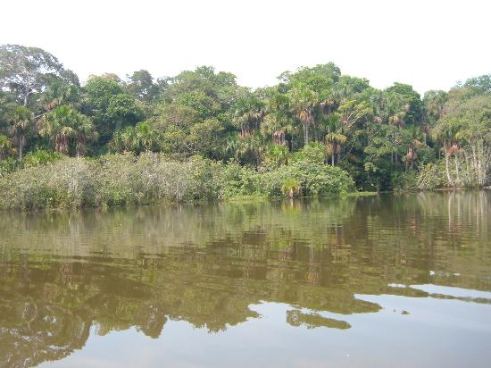 Puerto Maldonado, Peru: River and Jungle in the morning