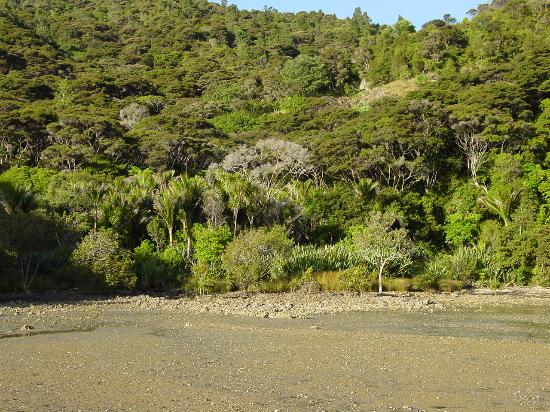 Whangaroa Harbour: Native bush