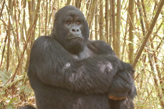 Gorilla's Nest / Jack Hanna Cottage: Confidence - Rwanda