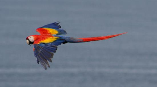 Lookout Inn Lodge: Macaws are the true stars of the Look Out Inn.  They're everywhere!
