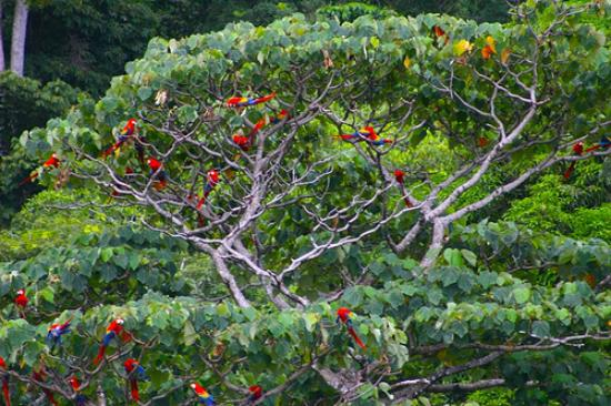 Lookout Inn Lodge: Macaws are all over the place!