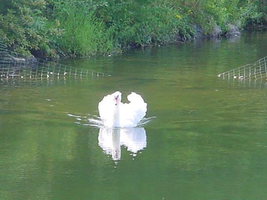 Dalem's Chalet: Swan
