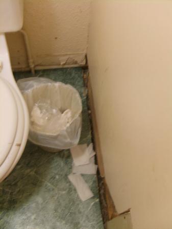 Princes St East Backpackers: Bathroom Floor