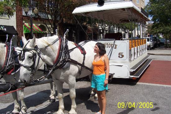 Historic District: the horse tour