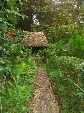 La Loma Jungle Lodge and Chocolate Farm: Wandering on one of the paths in La Loma