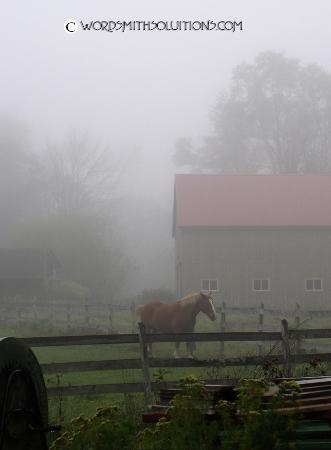 Daylily Dreams B&B: This view of a neighbor's horse in a pasture greeted us as we got in the car one morning at...