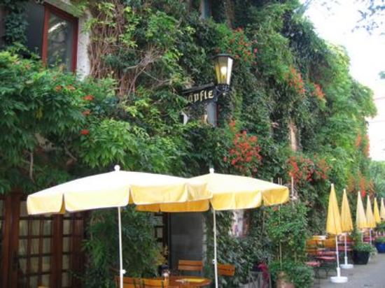 Hotel  Restaurant Weinstube Schapfle: vine covered hotel entrance