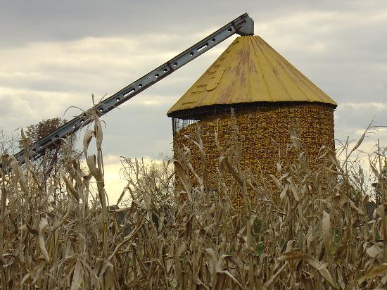 อินเดียน่า: Harvest is Done