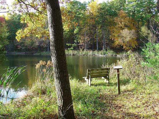 อินเดียน่า: A Pond to Sit and Think