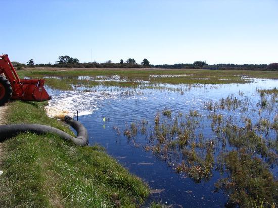 Milestone Bog: flooding bog for harvest