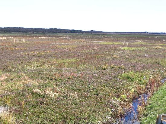 Siasconset, MA: overview photo of cranberry bog