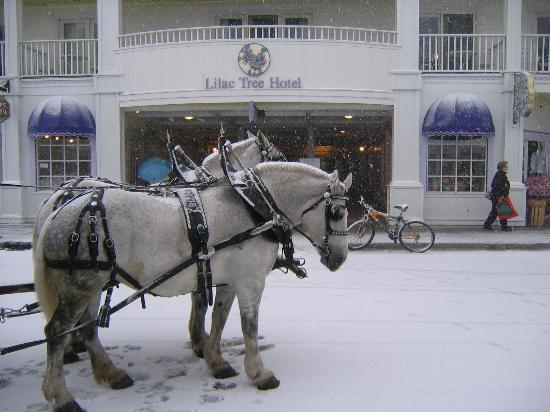 Lilac Tree Suites & Spa: Snow in October!!