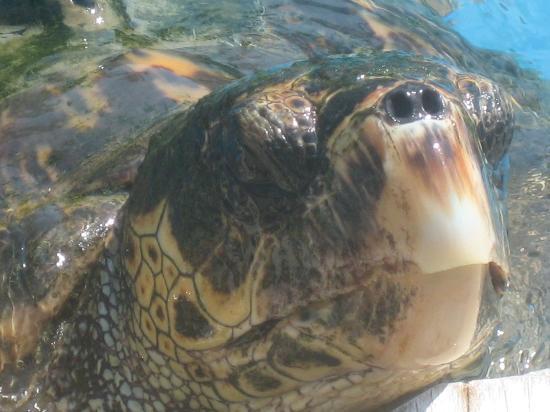 Iberostar Praia do Forte: Praia do Forte-Turtle sanctury