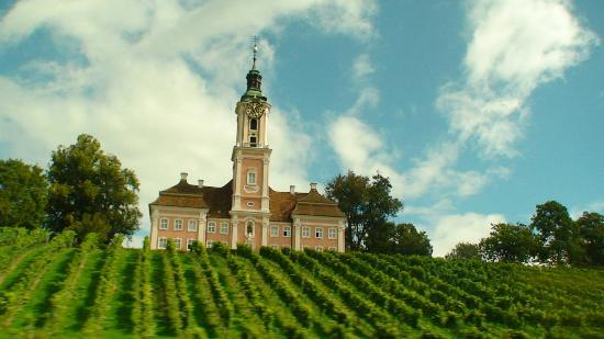 Szwajcaria: Vineyard