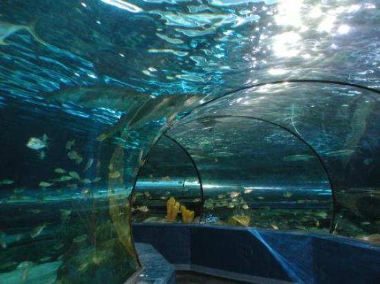 Ripley's Aquarium of Myrtle Beach: Underwater Tunnel