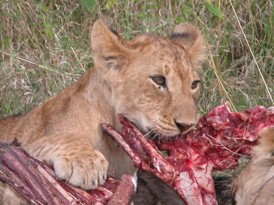 Fairmont Mara Safari Club: Breakfast