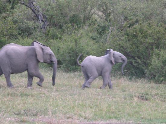 Fairmont Mara Safari Club: Happy Days