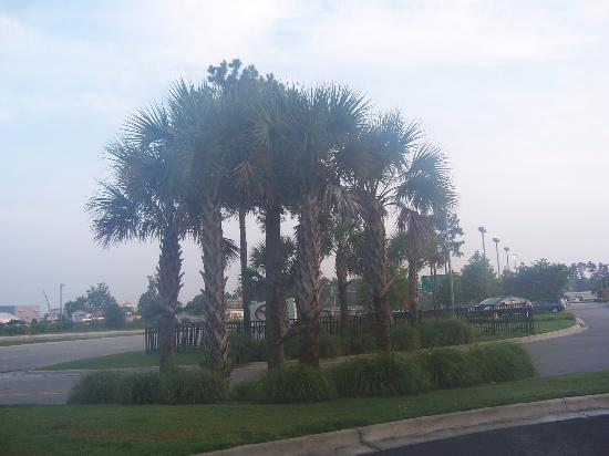 Suburban Extended Stay of Wilmington: Palm trees in front of the hotel