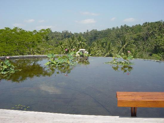 Four Seasons Resort Bali at Sayan: The lotus pond