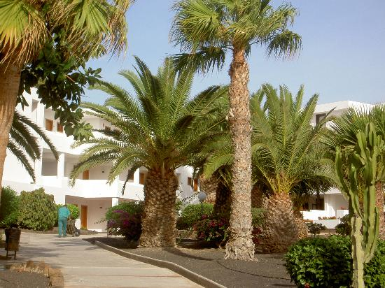 H10 Suites Lanzarote Gardens: loved the palm trees