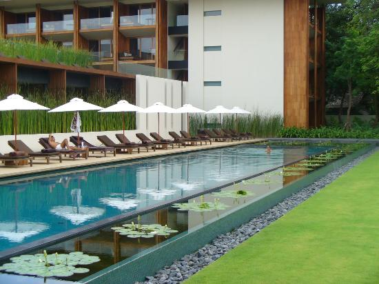 Anantara Chiang Mai Resort: watch the dragonflies as you swim