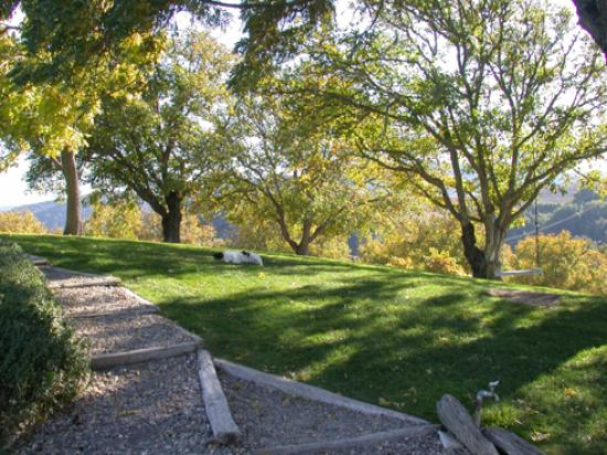 Dover Canyon Winery: Shady Grass Area with Homemade Swing