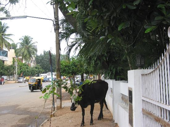 Bangalore, Indie: Landmark