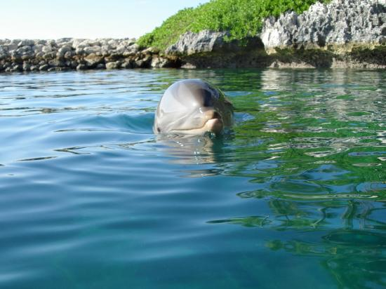 Dolphin Close Encounter: A cute one