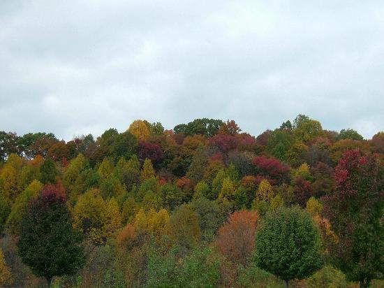 Zdjęcie Tennessee