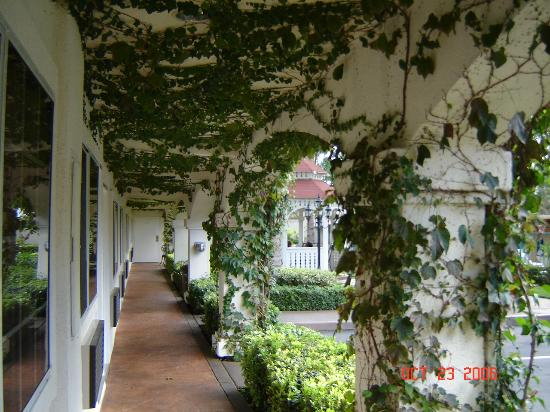 Dynasty Suites Redlands: Covered walkway with vines and soft music