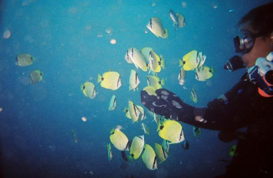 Prodiver Maui: Instructor Matt with butterfly fish